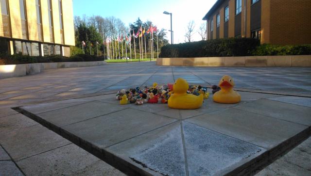 """A la entrada del Centro Europeo, una curiosa """"tradición"""" ha hecho acumular patitos de goma, que ahora se han institucionalizado como mascota del centro."""