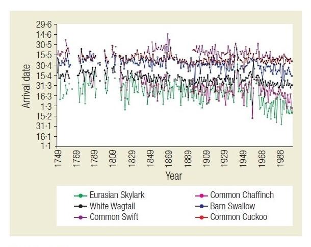 Efectos del cambio climático sobre las aves en Finlandia