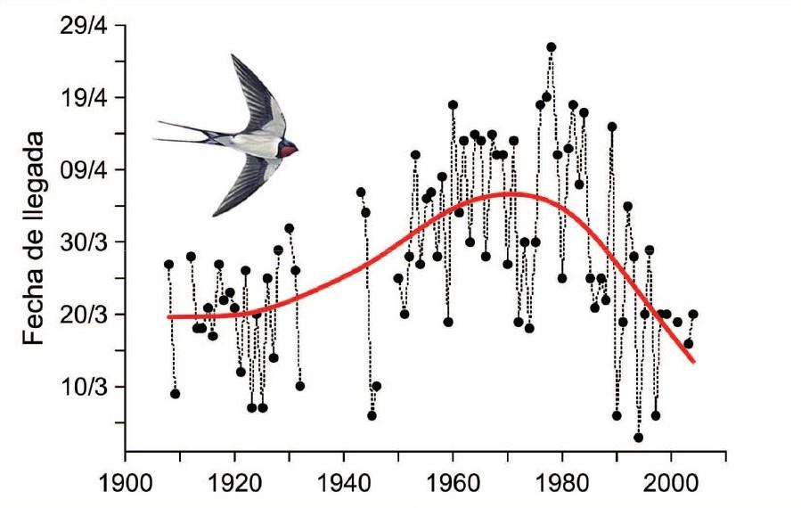 Efectos del cambio climático sobre las aves | Aemetblog
