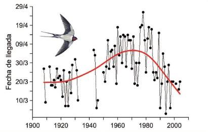 Efectos del cambio climático sobre las aves, llegada de la golondrina a Tortosa