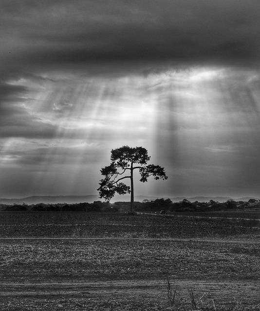 tree-3326514_640